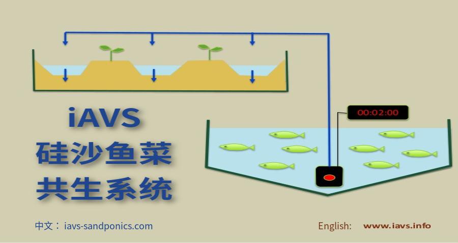 硅沙鱼菜共生系统